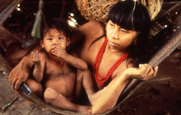 Ecuador's Waorani Indians are related to the uncontacted Tagaeri and Taromenane tribes. All are under great threat from oil exploration in the Yasuni Park.