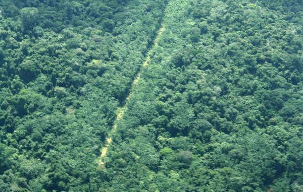 Illegal airstrip on Yanomami land, the largest forested indigenous territory in the world.