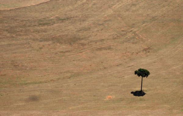 En muchas zonas de la Amazonia las plantaciones de soja han provocado una grave deforestación.