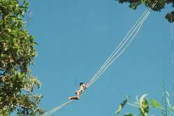 A Palawan climbing an aerial bridge made of rattan canes to reach a ginuqu tree canopy.