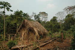 The 'Man of the Hole's' house and garden where he grows manioc and other vegetables.