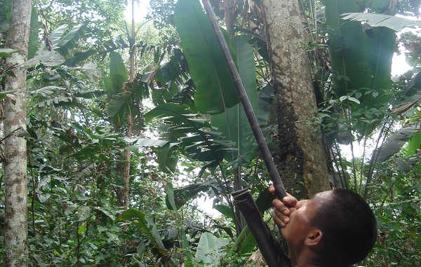 Ein Nukak-Mann jagt mit einem Blasrohr.