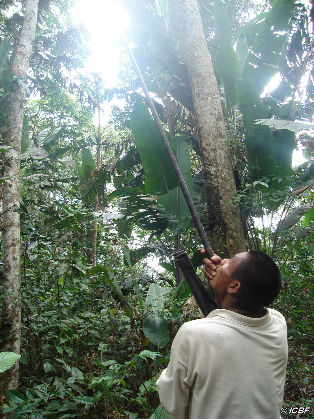 "Nukak man hunting with a blow-pipe. © <span class=""caps"">ICBF</span>"