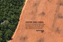 """""""Survival ha lanciato una campagna globale a sostegno degli Ayoreo."""""""