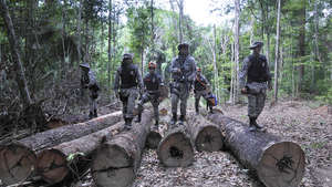Campaign triumphs as loggers expelled from territory of 'Earth's most threatened tribe'