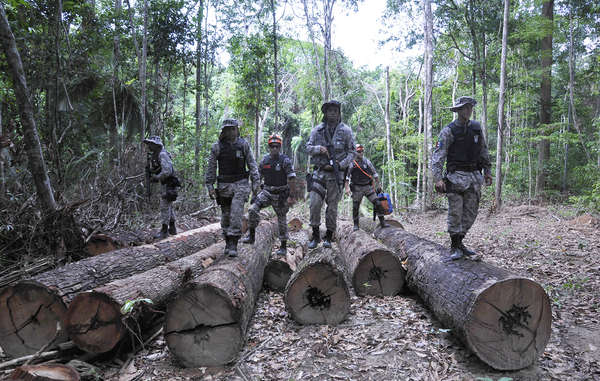 The Brazilian authorities have completed the first stage of their operation to remove illegal loggers and ranchers from Awá land.