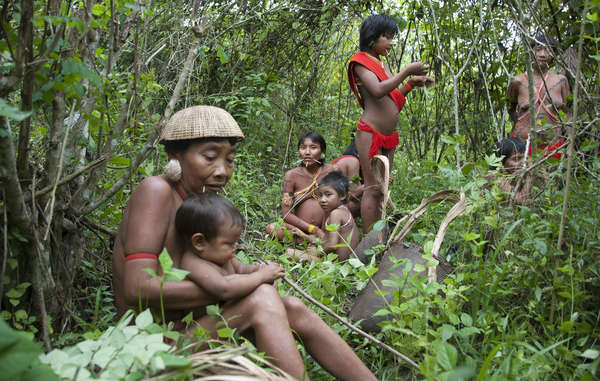 Pope Francis has acknowledged indigenous peoples' crucial role in conservation of their lands.