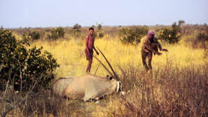 UN condemns Botswana's treatment of Bushmen