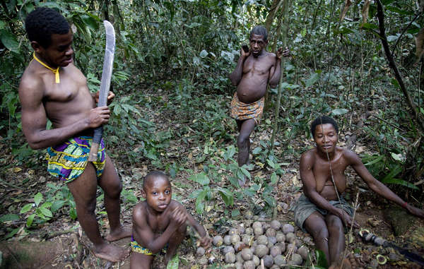 The Baka use the Cameroonian rainforest for food, medicine, and religious rituals. They are now excluded from it by force.