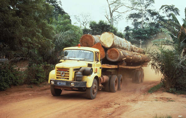 Widespread logging has been an acute problem for rainforest tribes for many years.