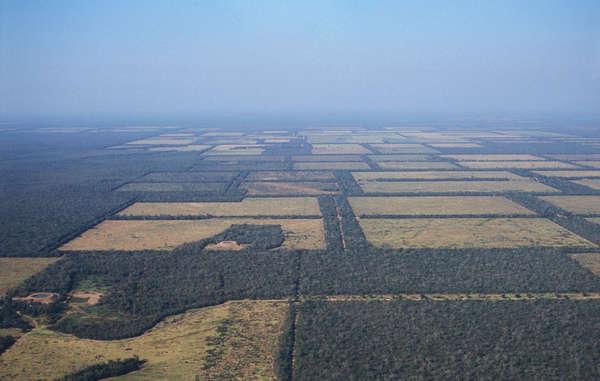 Ein Großteil des Landes der Ayoreo Totobiegosode ist abgeholzt worden, Paraguay