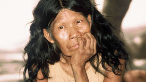 UN official condemns 'massive destruction' of uncontacted tribe's land
