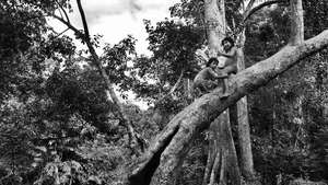 Eden Project photo exhibition showcases tribal people of the rainforest