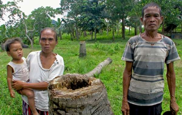 Palawan tribal people say that their coconut trees are dying because of pests spreading from the oil palm plantations.