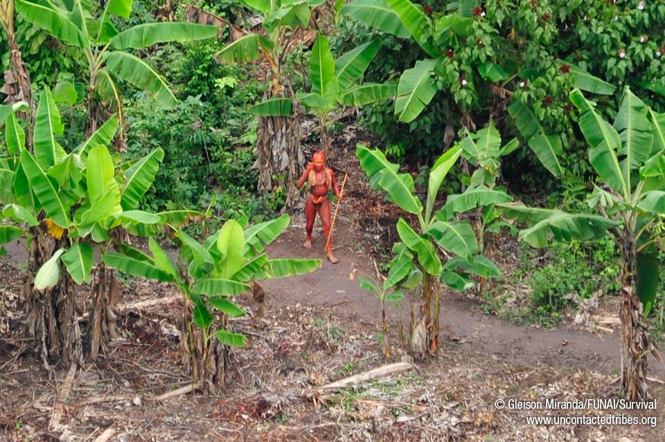 http://assets.survivalinternational.org/static/campaigns/uncontactedtribes/12935547_crop_960.jpg
