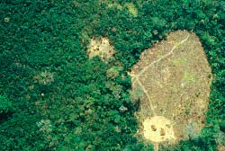 An Uru Eu Wau Wau community seen from the air