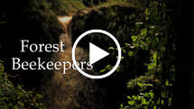 Forest Beekeepers