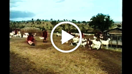 Maasai-thumb_460_wide_play