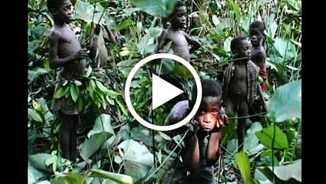 Pygmies-thumb_460_wide_play