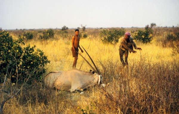 The Bushmen have been criminalized for hunting to feed their families by the Botswana government.