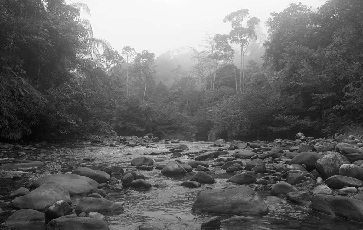 Penan rainforest, Sarawak, Malaysia