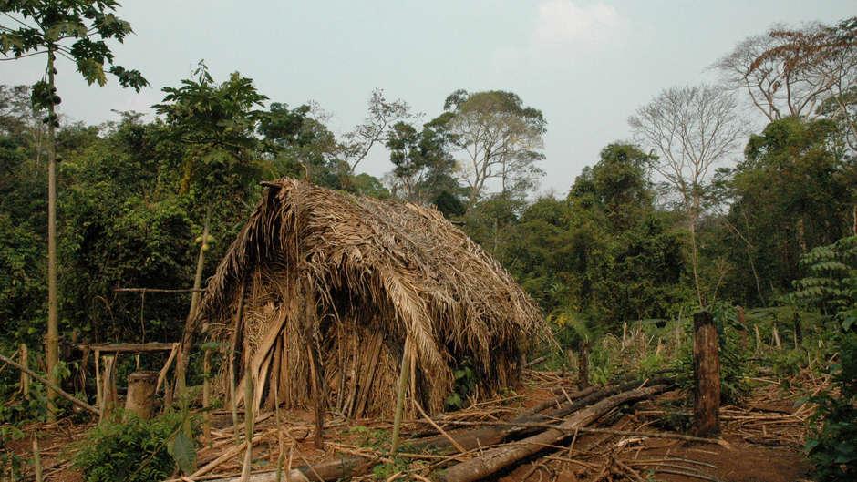 Il FUNAI ha diffuso un nuovo, raro video dell'ultimo sopravvissuto di una tribù incontattata