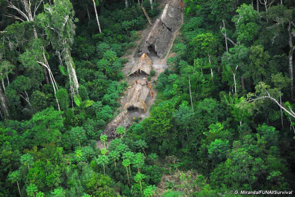 Uncontacted Indians of Brazil - Survival International