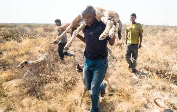 Secondo la legge anti-caccia del Botswana, i Boscimani sono criminali perché cacciano per sfamare le loro famiglie.