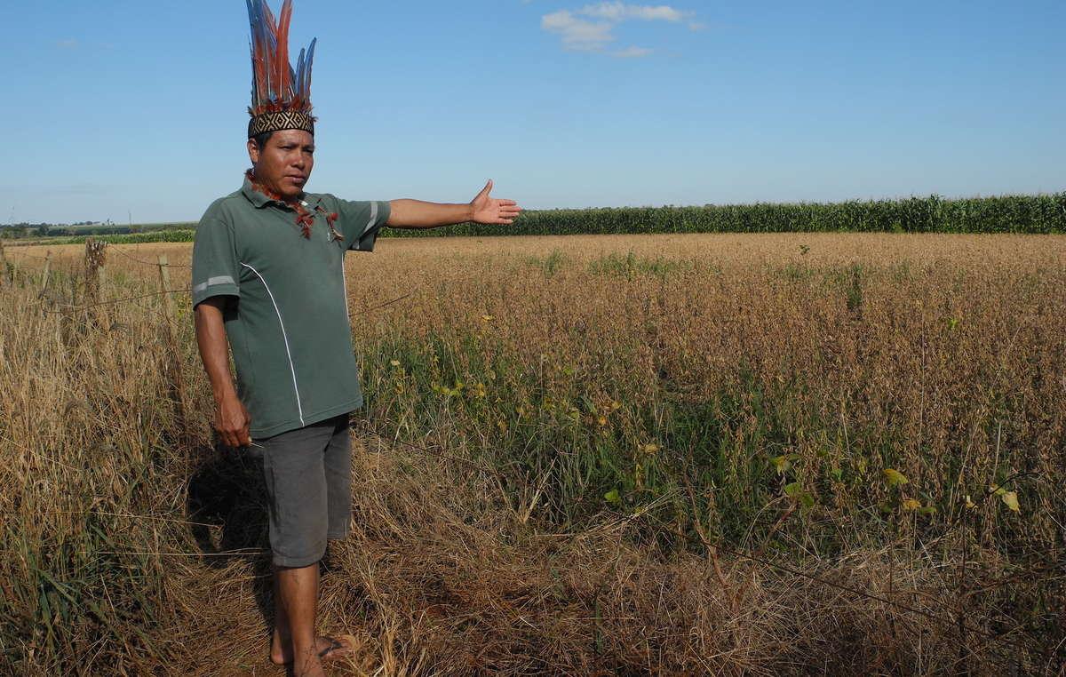 Políticos antindígenas están promoviendo el robo de tierras indígenas. Casi todo el bosque de los guaraníes ha sido usurpado y destruido para dar paso a plantaciones de gran escala.