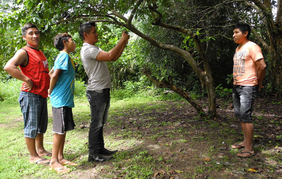 """Los awás participan en el innovador proyecto """"Voz indígena"""", de Survival."""