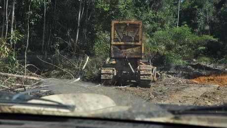 Trator-abrindo-estrada-para-explorao-ilegal-de-madeira-na-ti-kawahiva-do-rio-pardo_460_wide