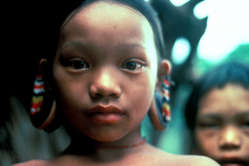 The Penan depend on their forest for survival.