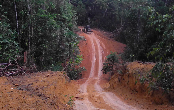 Armed loggers and powerful ranchers are razing the Kawahiva's forest to the ground.