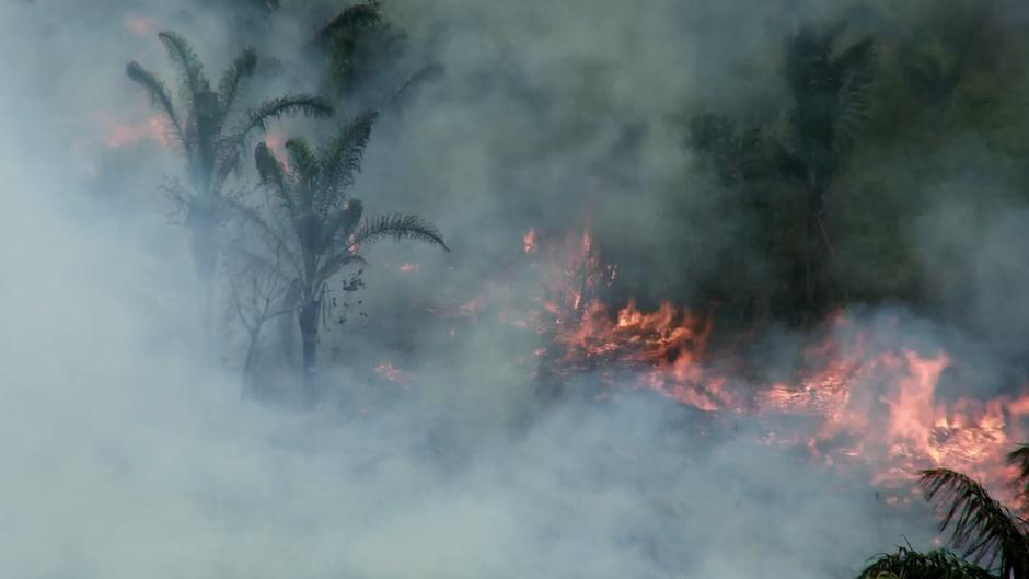 Los activistas temen que esta oleada de incendios aniquile a los awás no contactados.