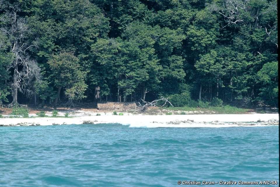 Islander On The Beach