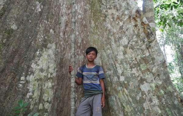Les Orang Rimba gèrent leur forêt et en dépendent depuis des générations.