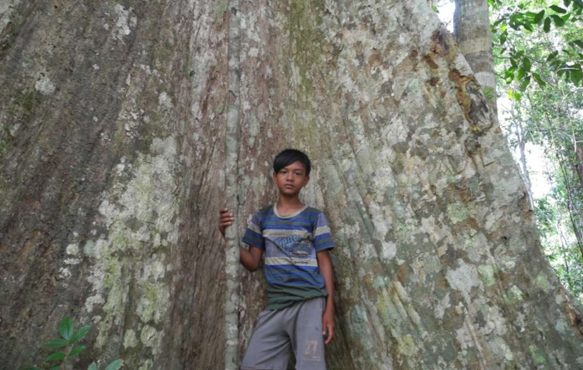 Seit Generationen leben die Orang Rimba vom Wald – und schützen ihn.