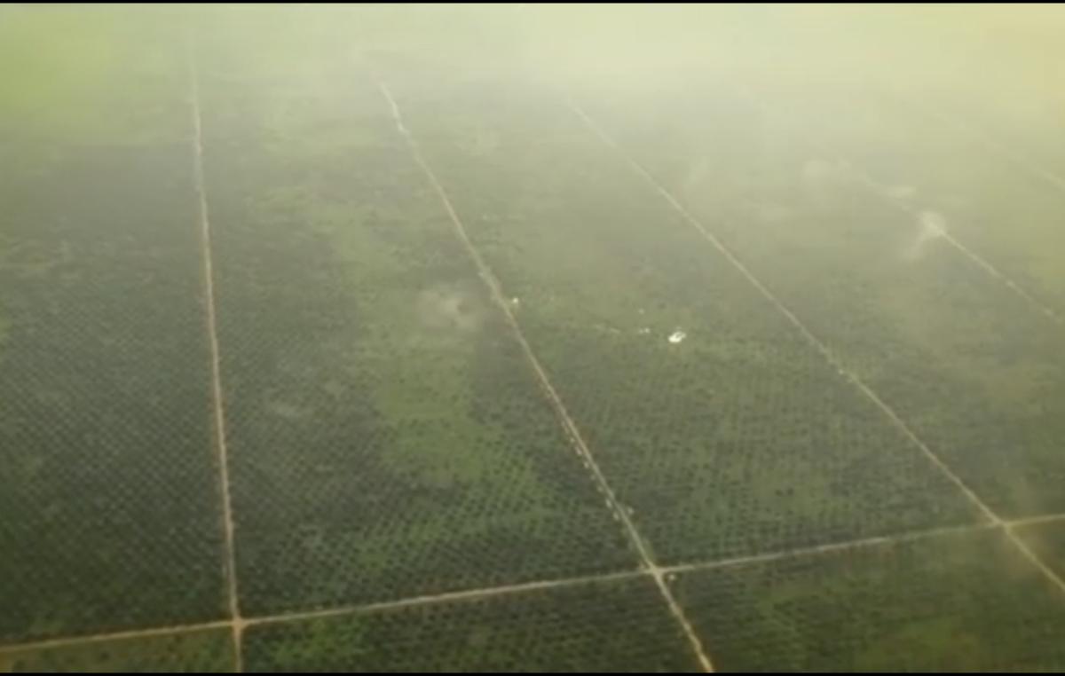 Das Gebiet der Orang Rimba liegt wie eine Inseln in einem Meer von Plantagen.