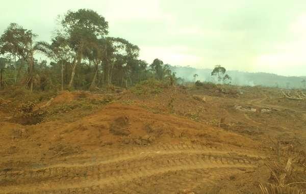 Rougier ha talado zonas de selva tropical en el este de Camerún para la construcción de una presa.