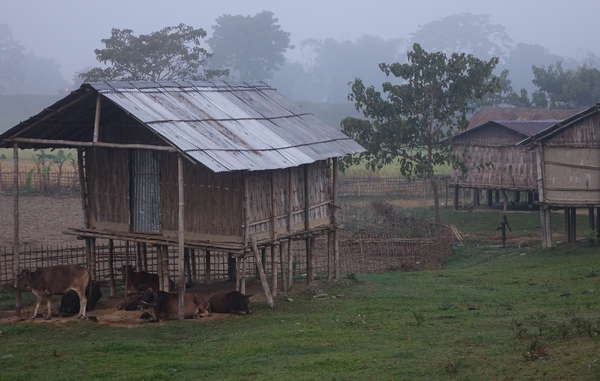 Many people in and around Kaziranga were moved there by the British to work on tea plantations. They face eviction, displacement, and frequent harassment by forest guards.