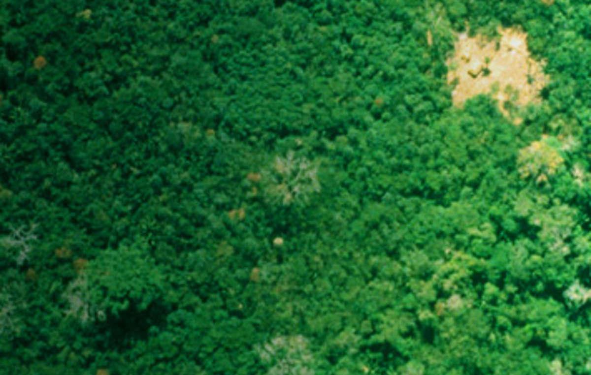 Aldeas remotas de la tribu uru eu wau wau vistas desde el aire, Brasil.