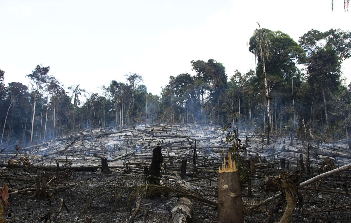 Loggers, settlers and ranchers have destroyed large areas of the Awás forest.
