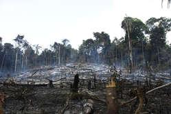 Wälder auf dem Land der Awá werden illegal von Siedlern gerodet.