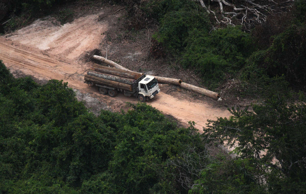 Illegal loggers in the Awá area pose an extremely serious threat to the tribe's well-being, Brazil.