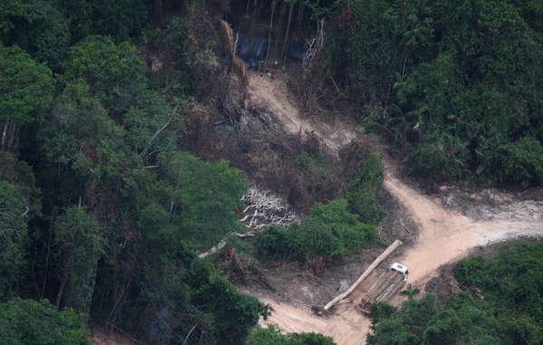 Madeireiros no território dos Awá. Com a destrução ilegal da floresta, poderia se tornar impossível a sobrevivência dos Awá.