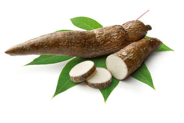 Maniok ist das Grundnahrungsmittel einer Milliarde Menschen