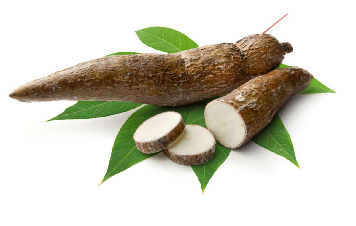 Manioc is the staple food of a billion people