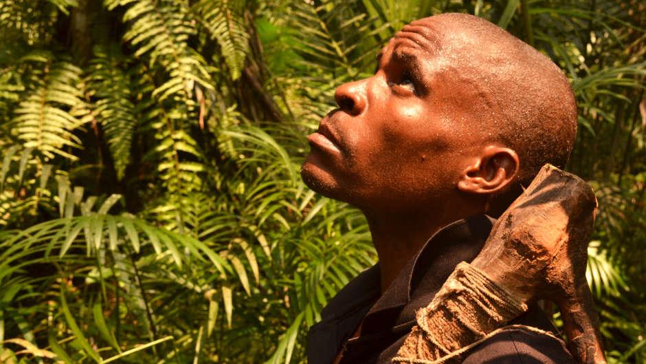 La Wildlife Conservation Society (WCS) s'associe à des entreprises d'exploitation forestière et se fait complice d'abus en Afrique centrale.