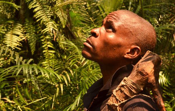 """Empresas madereras y grandes ONG de la conservación se han apropiado de vastas extensiones de la tierra ancestral de los """"pigmeos"""" bayakas en la República del Congo sin su consentimiento."""