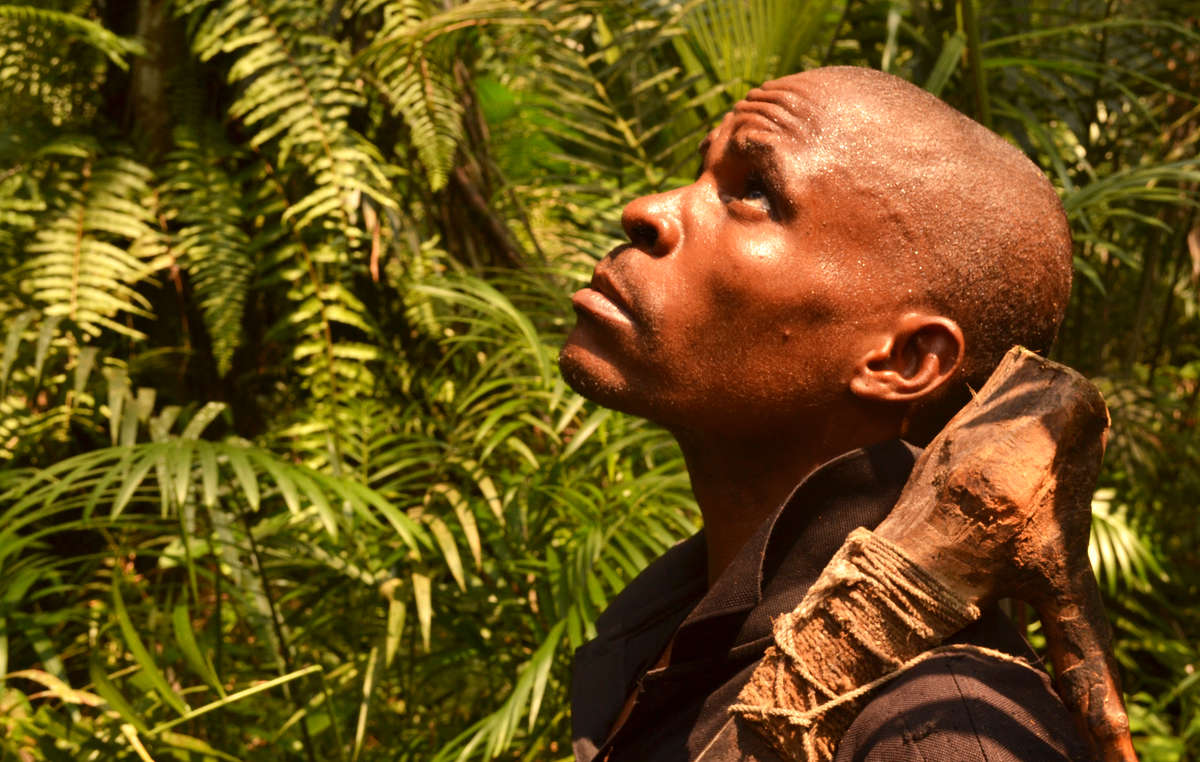 Vast swathes of the Bayakas ancestral homelands in the Republic of Congo have been taken over without their consent by loggers and big conservation NGOs.